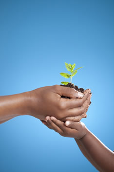 Legacy Society cover image - hands holding a plant